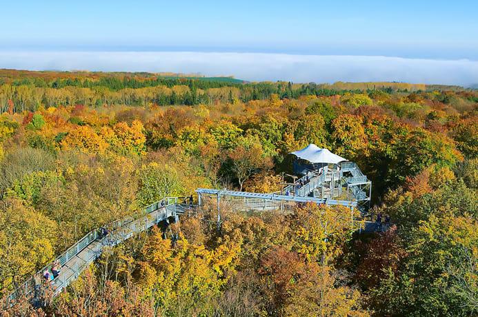 Wanderweg in Höhe der Baumkronen im Herbst