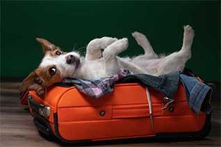 Blog TravelSecure: Reisen mit dem Hund: Worauf freut sich dein Vierbeiner im Urlaub?