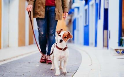Stadtereise mit dem Hund
