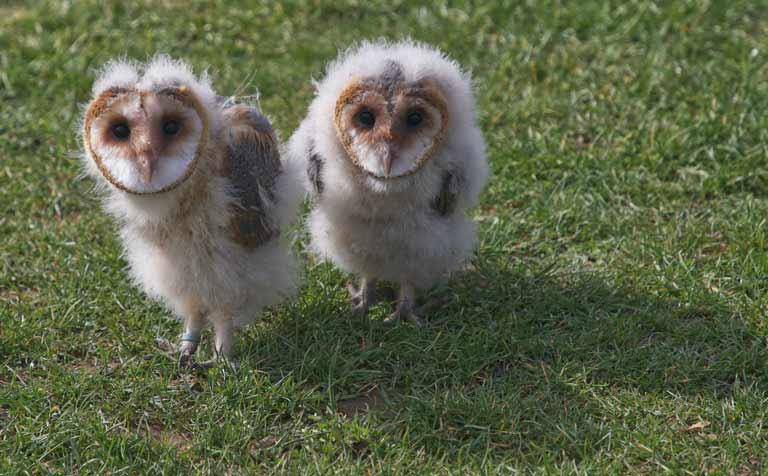 Wandern im Herbst Respekt vor Tieren Natur Wanderversicherung Notfaelle